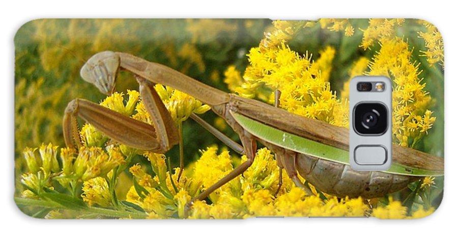 Praying Mantis Galaxy S8 Case featuring the photograph Mr. Mantis by Sara Raber