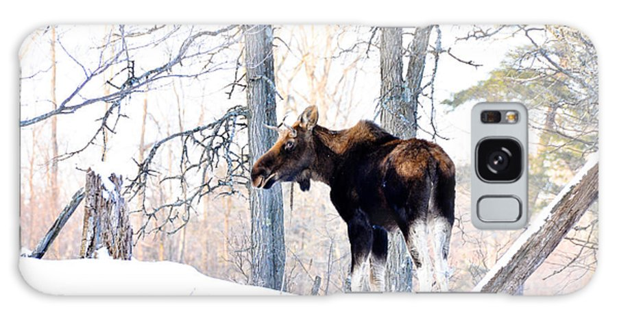 Moose Galaxy S8 Case featuring the photograph Mr. Moose by Cheryl Baxter