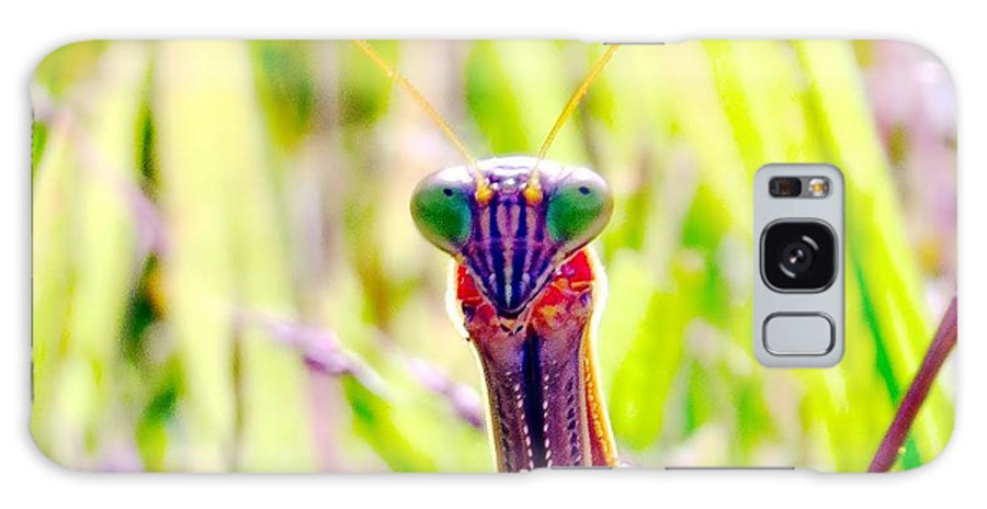 Praying Galaxy S8 Case featuring the photograph Mrs Mantis by Art Dingo