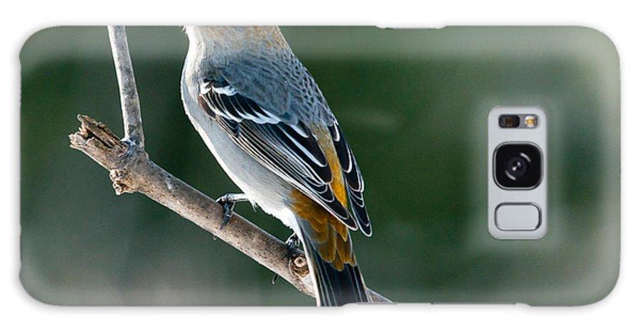 Pine Grosbeak Galaxy S8 Case featuring the photograph Mrs. Pine Grosbeak by Cheryl Baxter