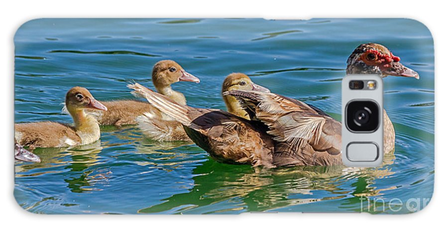 Birds Galaxy S8 Case featuring the photograph Muscovy Family by Kate Brown