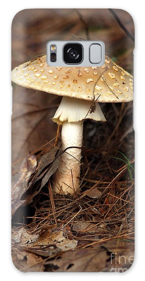 Mushroom Galaxy S8 Case featuring the photograph Mushroom by Kenny Glotfelty