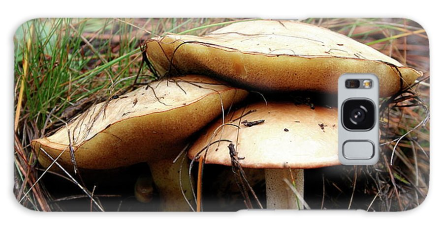 Mushrooms Galaxy S8 Case featuring the photograph Mushrooms by Christiane Schulze Art And Photography