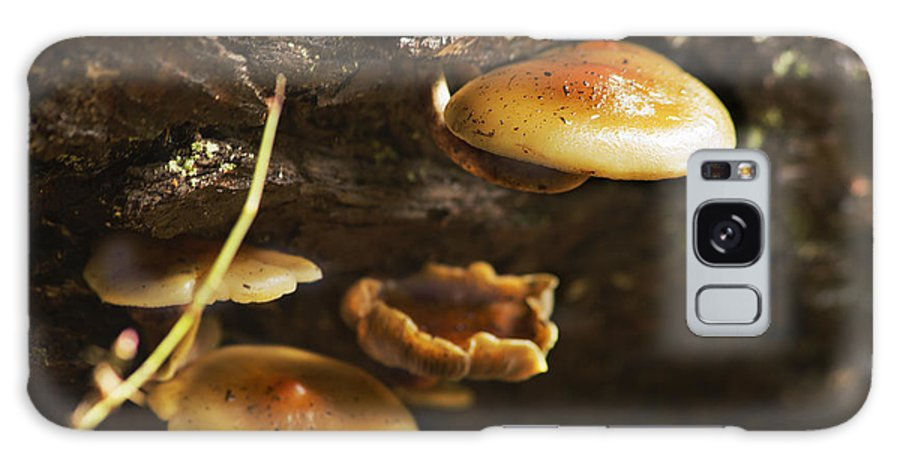 Mushrooms Galaxy S8 Case featuring the photograph Mushrooms No 1 by Belinda Greb