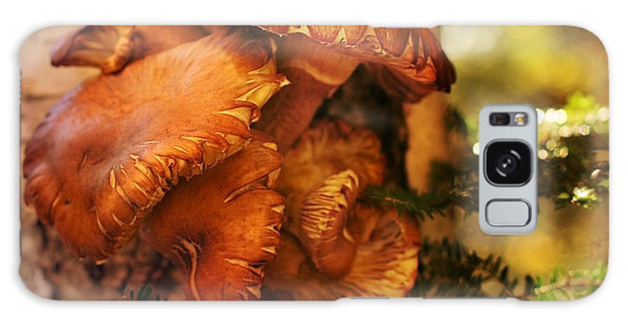 Mushrooms Galaxy S8 Case featuring the photograph Mushrooms Untitled 2754 by Damon Clarke