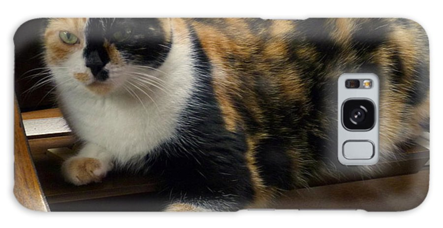 House Pet Galaxy S8 Case featuring the photograph Music Of The Night by Lingfai Leung