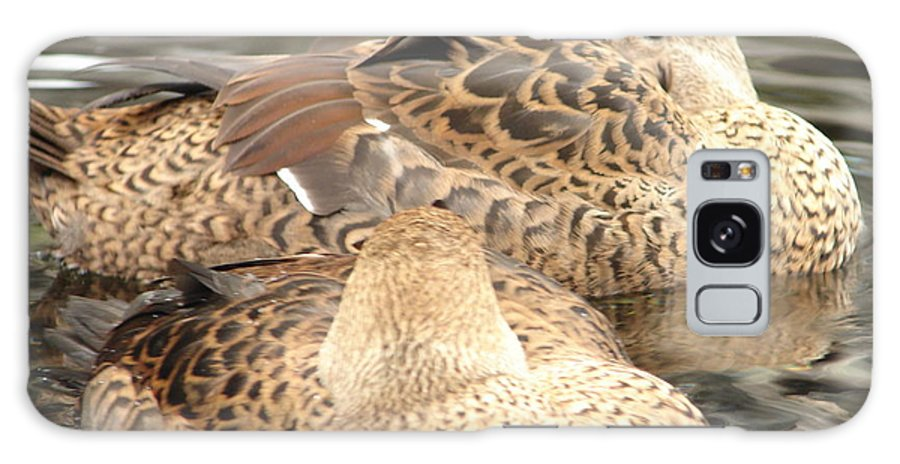 Bird Galaxy S8 Case featuring the photograph My Beak Is Cold by Lew Davis