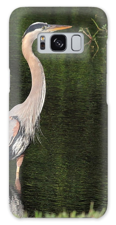 Great Blue Heron Galaxy S8 Case featuring the photograph My Best Side by Cindy Reilley