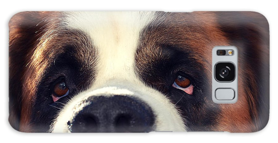 St. Bernard Galaxy S8 Case featuring the photograph My Dog Is My Bff by Robin Dickinson