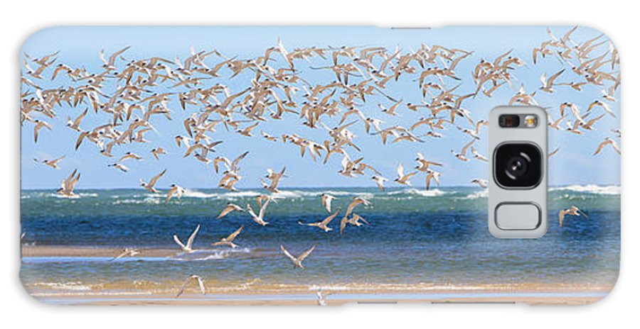 Tern Galaxy S8 Case featuring the photograph My Tern by Bill Wakeley