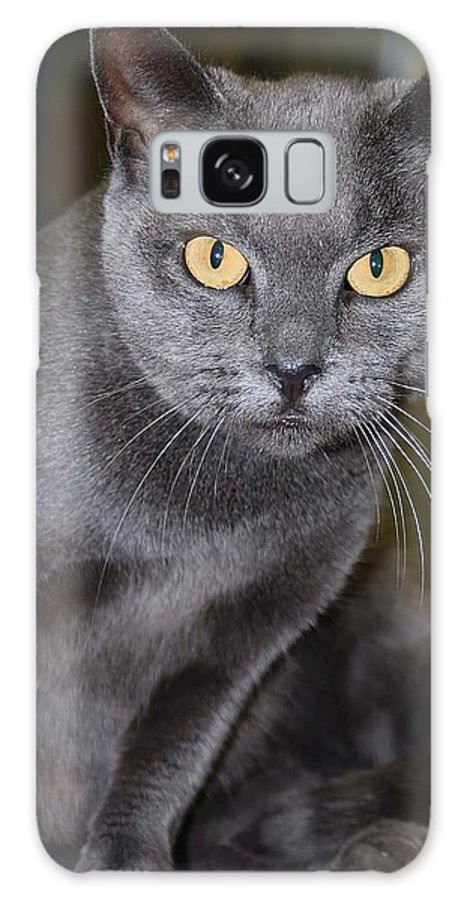 Gold Eyes Galaxy S8 Case featuring the photograph Mystic by Joyce Baldassarre