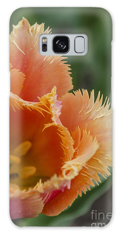 Paris Galaxy S8 Case featuring the photograph Natural Beauty by Sally Zeunert