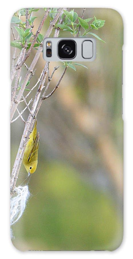 Nest Galaxy S8 Case featuring the photograph Nest Worrrk by Ian Ashbaugh