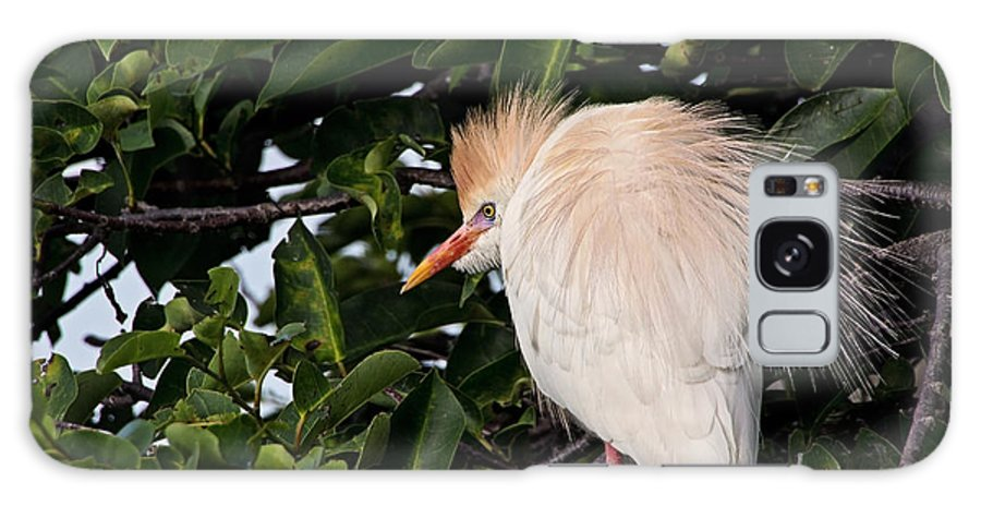 Cattle Egret Galaxy S8 Case featuring the photograph Nesting Cattle Egret by Theo OConnor