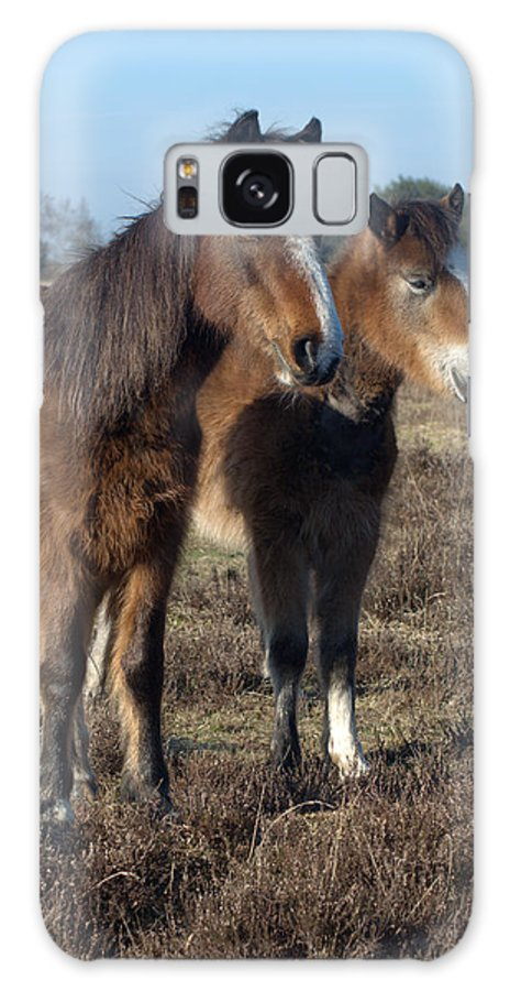 New Forest Pony Galaxy S8 Case featuring the photograph New Forest Ponies by Chris Day