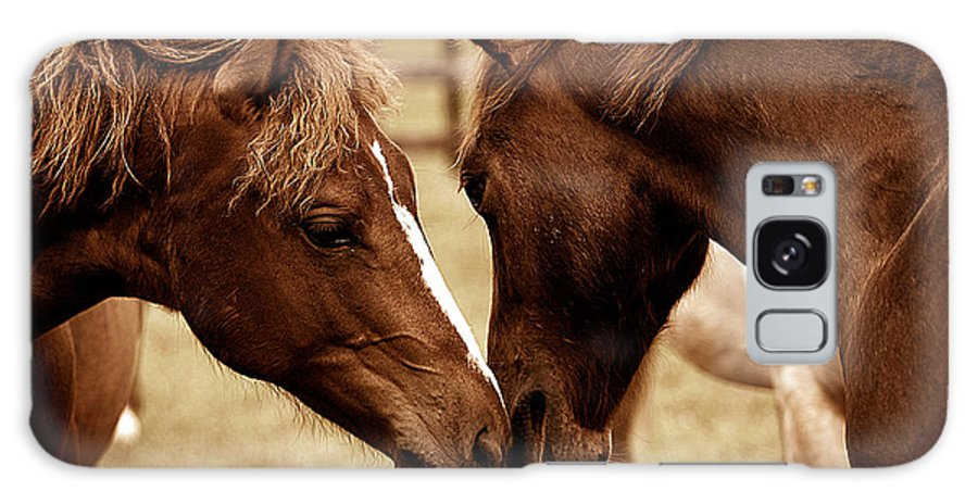 Equine Galaxy S8 Case featuring the photograph New Friends by Terri Cage