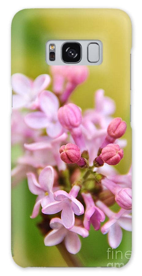 Lilac Galaxy S8 Case featuring the photograph New Lilacs by Crystal Poteat