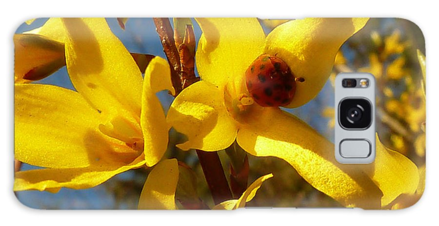 Forsythia Galaxy S8 Case featuring the photograph New Season - Old Friend ... Forsythia In Springtime by Connie Handscomb