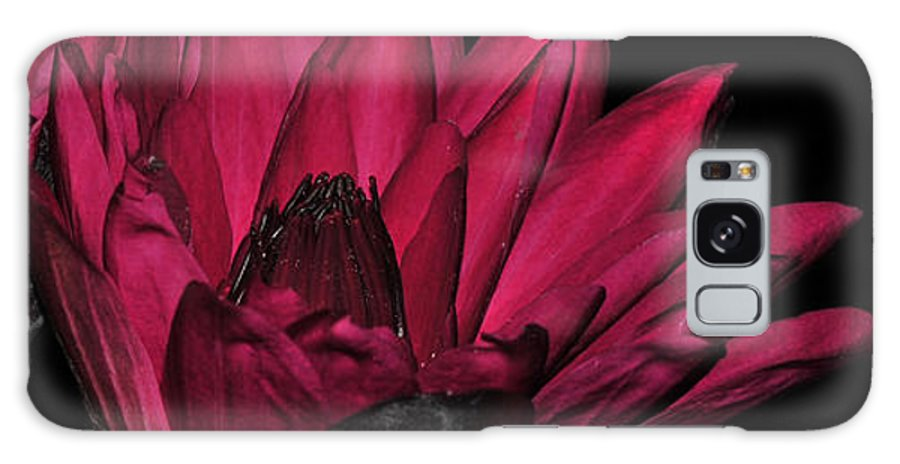 Lily Galaxy S8 Case featuring the photograph Night Blooming Lily 1 Of 2 by Terri Winkler