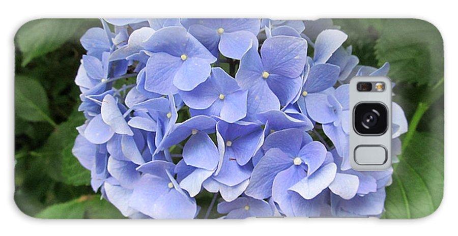 Flower Galaxy S8 Case featuring the photograph Nikko Blue Hydrangea by Robert Speziale