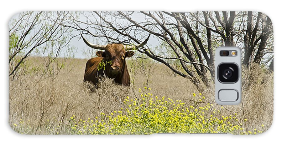 Flowers Galaxy S8 Case featuring the photograph No Bull by Hilton Barlow