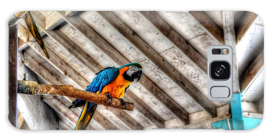 Parrot Galaxy S8 Case featuring the photograph No I Don't Want A Cracker by Michael Damiani