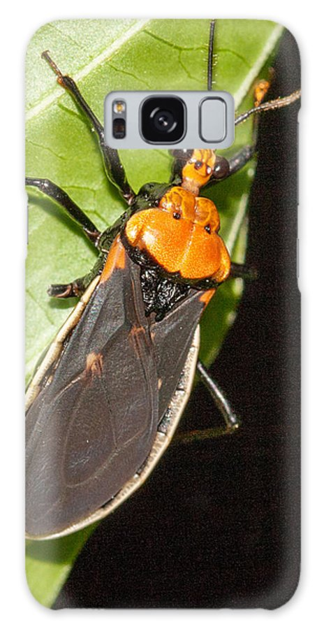Belize Galaxy S8 Case featuring the photograph Nocturnal Bug by Jean Noren