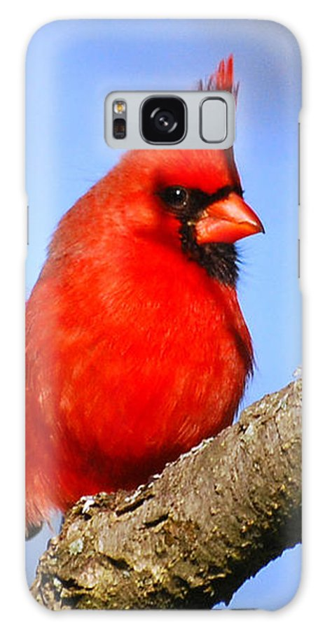 Cardinal Galaxy S8 Case featuring the photograph Northern Cardinal by Christina Rollo