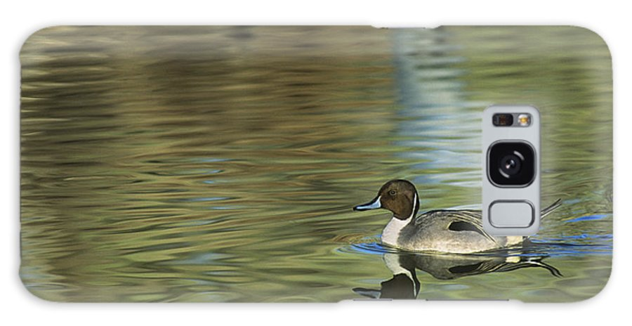 North America Galaxy S8 Case featuring the photograph Northern Pintail In A Quiet Pond California Wildlife by Dave Welling