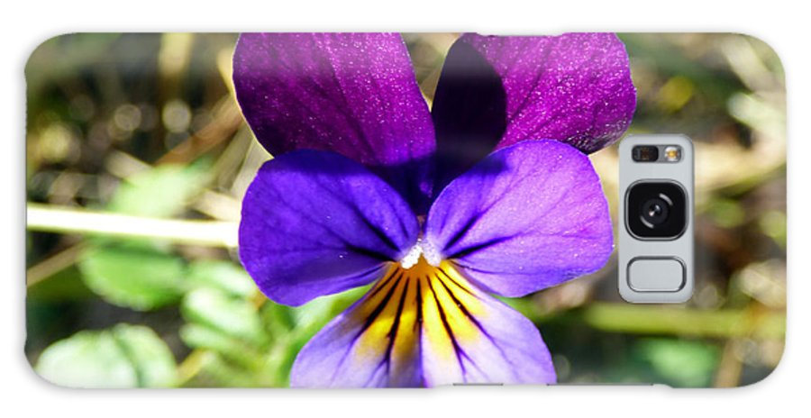 Violet Galaxy S8 Case featuring the photograph November Viola by Rennae Christman