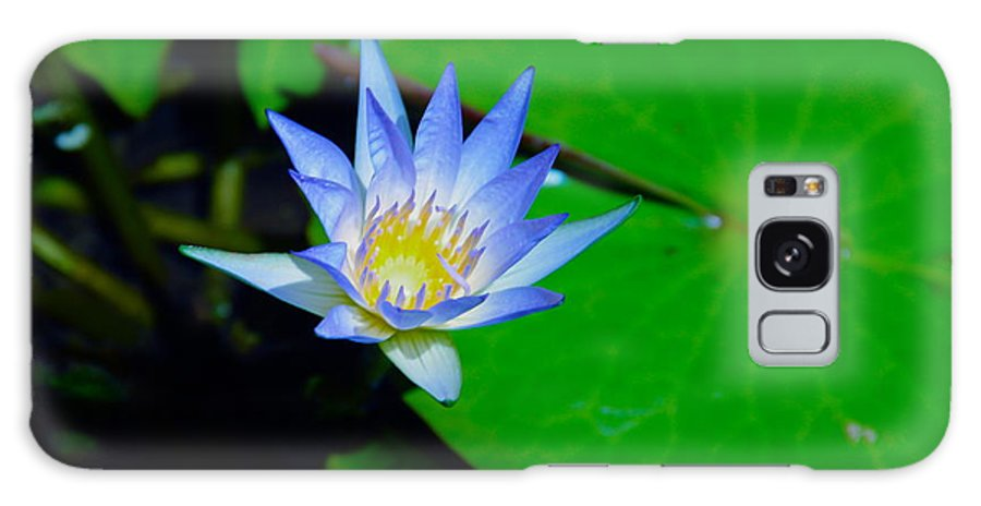 Water Lily Galaxy S8 Case featuring the photograph Nymphae Caerulea by Deanne Rotta