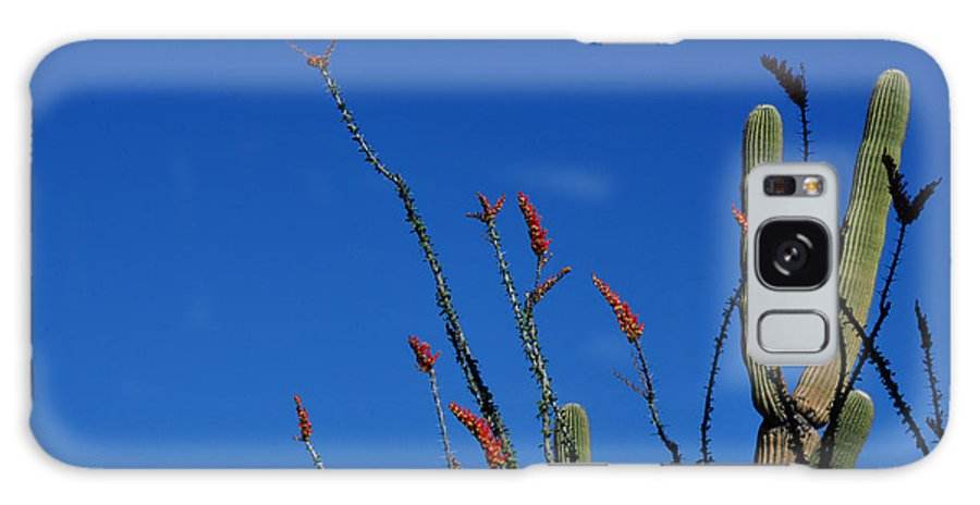 Saguaro Photography Galaxy S8 Case featuring the photograph Ocotillo And Saguaro by Diane Lent