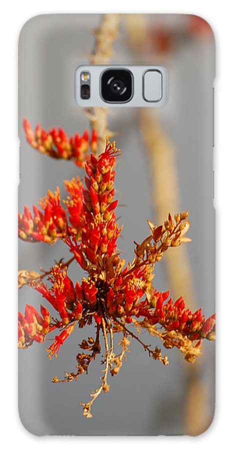 Ocotillo Galaxy S8 Case featuring the photograph Ocotillo Budding by Jean Booth