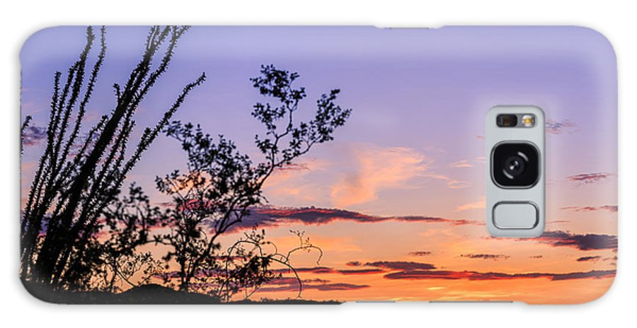 Ocotillo Galaxy S8 Case featuring the photograph Ocotillo Sunset by Ken Brown