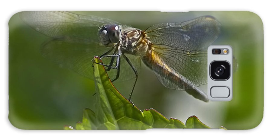 Odonata Galaxy S8 Case featuring the photograph Odonata by Sharon Talson