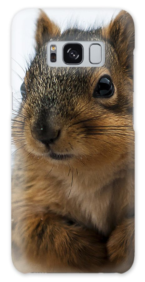 Squirrel Galaxy S8 Case featuring the photograph Oh Hello by Edward Peterson