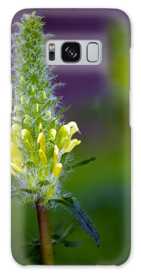Wildflower Galaxy S8 Case featuring the photograph Oh So Soft by Eric Rundle