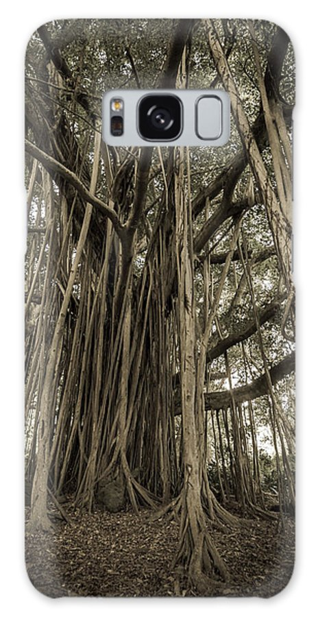 3scape Galaxy S8 Case featuring the photograph Old Banyan Tree by Adam Romanowicz