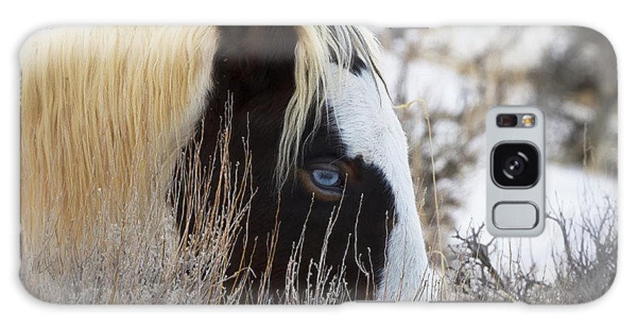 Mccullough Peaks Wild Mustang Galaxy S8 Case featuring the photograph Old Blue Eyes by Elaine Haberland