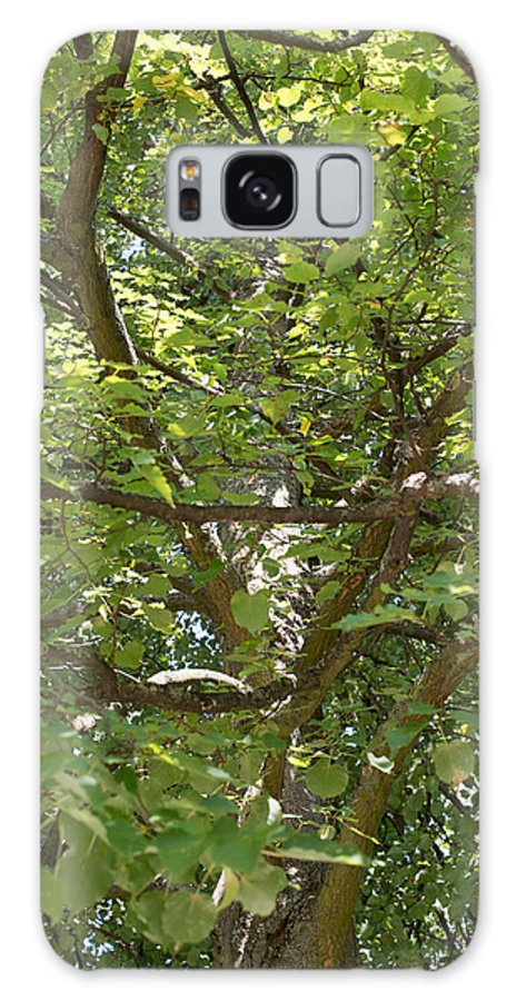 Autumn Galaxy S8 Case featuring the photograph Old Linden Tree by Frank Gaertner