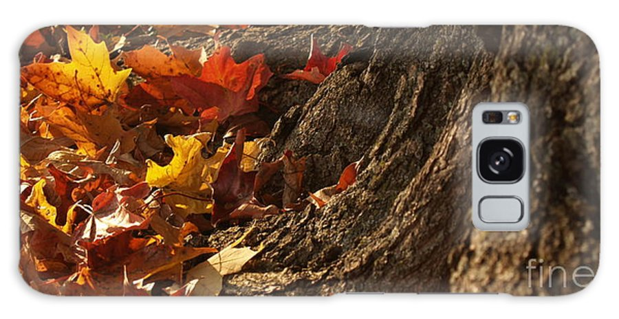 Maple Tree Galaxy S8 Case featuring the photograph Old Maple Roots In Backlit Autumn by Anna Lisa Yoder