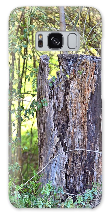 8190 Galaxy S8 Case featuring the photograph Old Stump by Gordon Elwell