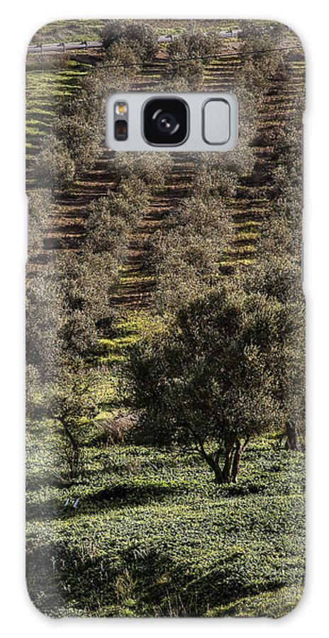 Olive Trees Trees Galaxy S8 Case featuring the photograph Olive Trees by Isaac Silman