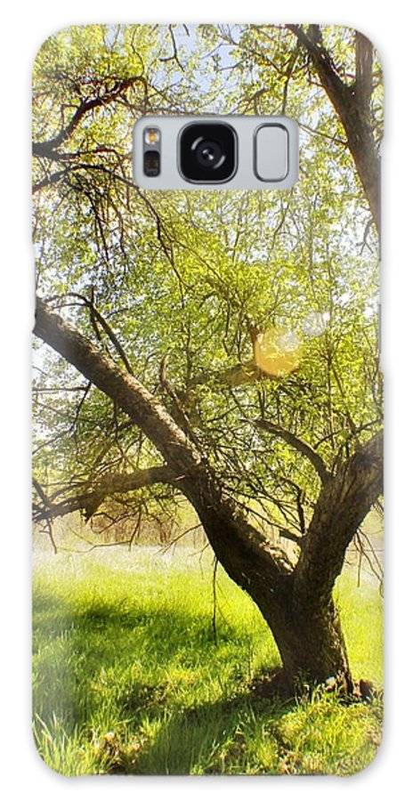 Galaxy S8 Case featuring the photograph On Blackburne Farm by Chet B Simpson