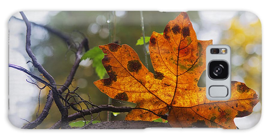 Fall Leaf Galaxy S8 Case featuring the photograph On Display by Belinda Greb