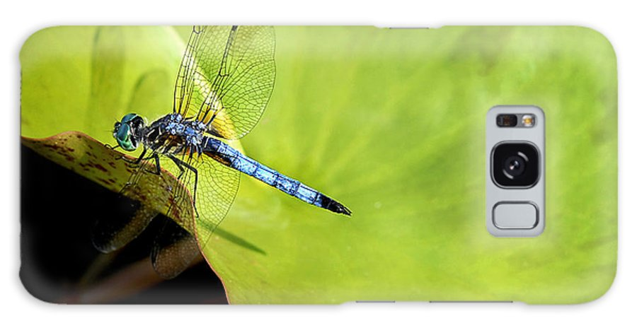 Dragonfly Galaxy S8 Case featuring the photograph On The Edge by Claudia Kuhn