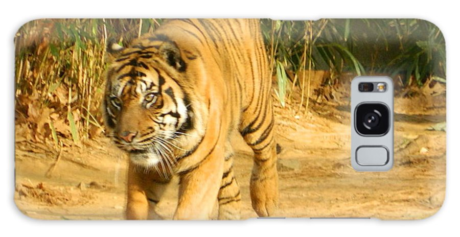 On The Prowl Galaxy S8 Case featuring the photograph On The Prowl by Emmy Vickers