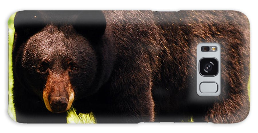 Bear Galaxy S8 Case featuring the photograph One Big Bad Momma by Lori Tambakis