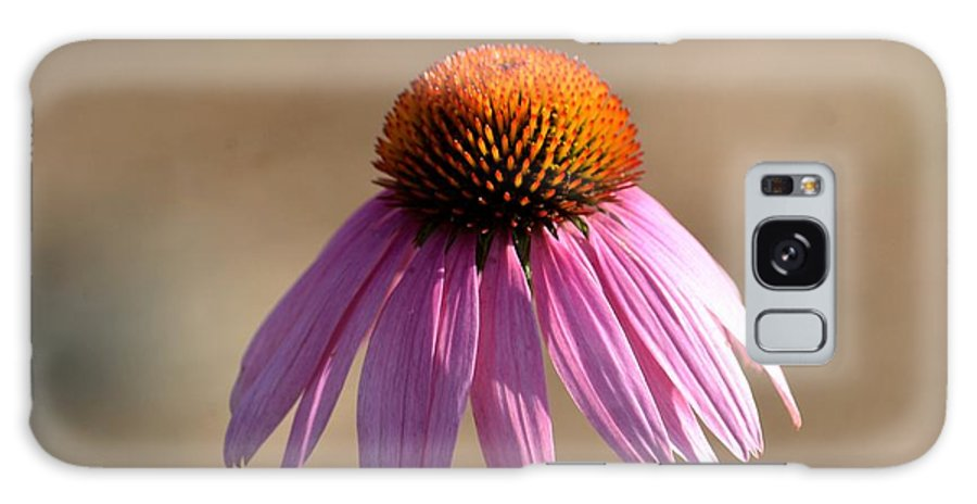 One Coneflower Galaxy S8 Case featuring the photograph One Coneflower by Maria Urso