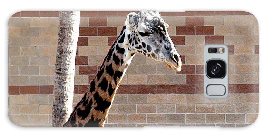 Zoo Galaxy S8 Case featuring the photograph One Giraffe by Matt Johnson